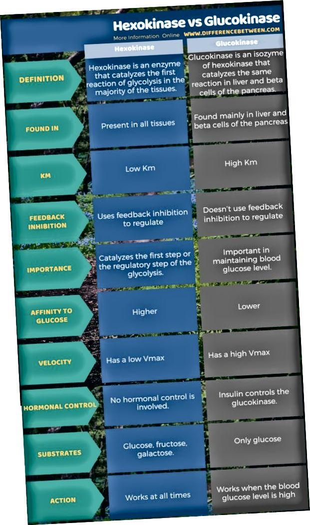 Rozdiel medzi hexokinázou a glukokinázou v tabuľkovej forme