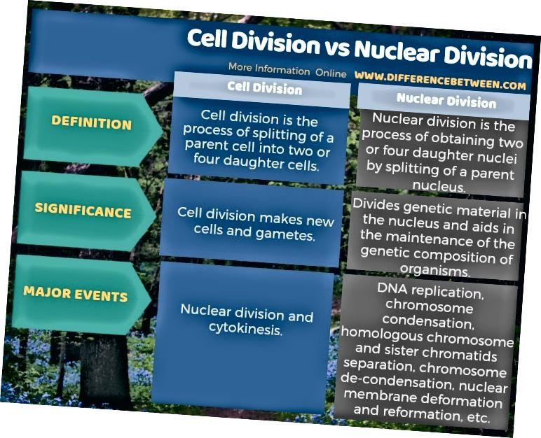 الفرق بين تقسيم الخلية والشعبة النووية في شكل جدول
