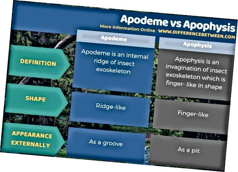الفرق بين Apodeme و Apophysis - شكل جدولي