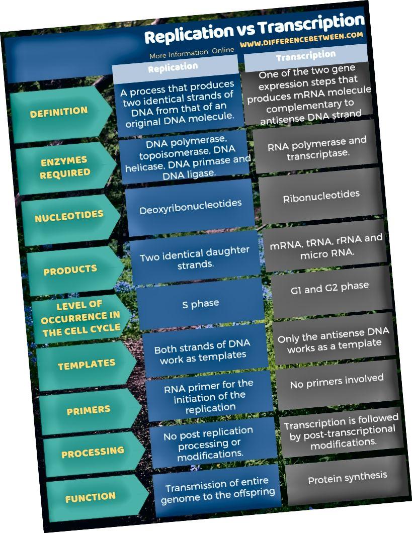 Ero replikaation ja transkription välillä taulukkomuodossa