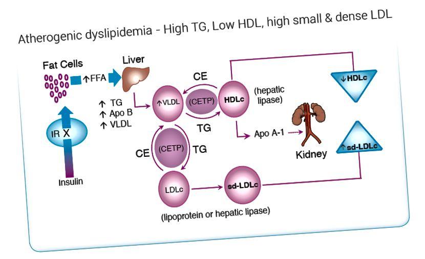 Düslipideemia ja hüperlipideemia erinevus