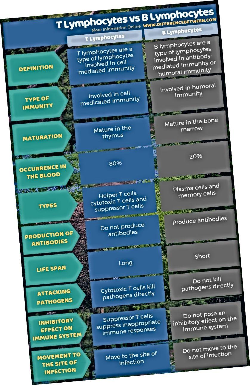 الفرق بين الخلايا اللمفاوية التائية والخلايا اللمفية ب في شكل جدول