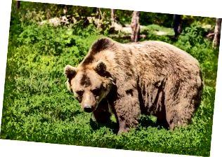 Διαφορά μεταξύ Bear και Bare