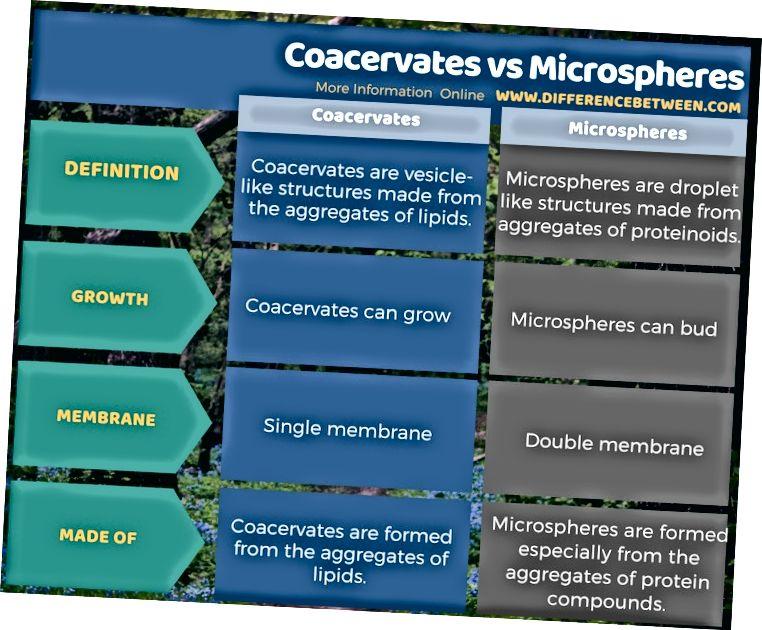 الفرق بين Coacervates والمجهرية في شكل جدول