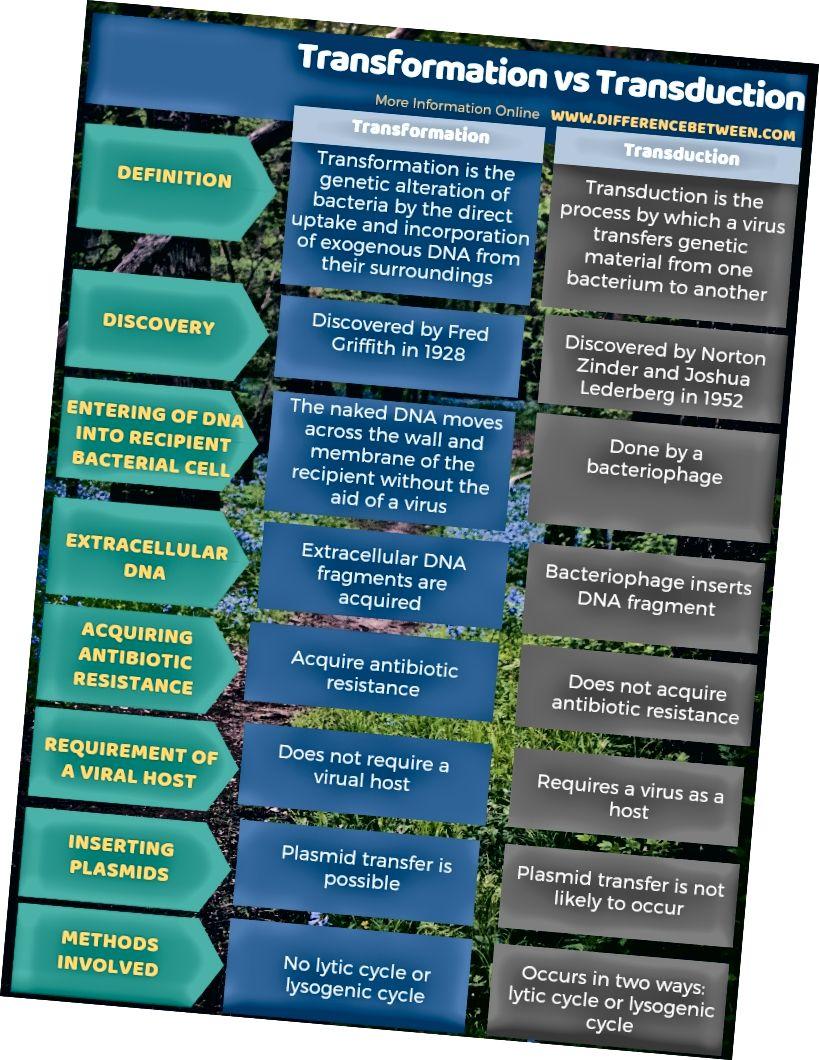Transformatsiooni ja transduktsiooni erinevus - tabelvorm