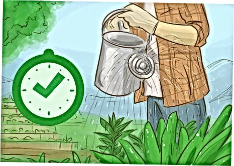 Успостављање продуктивног поврћа