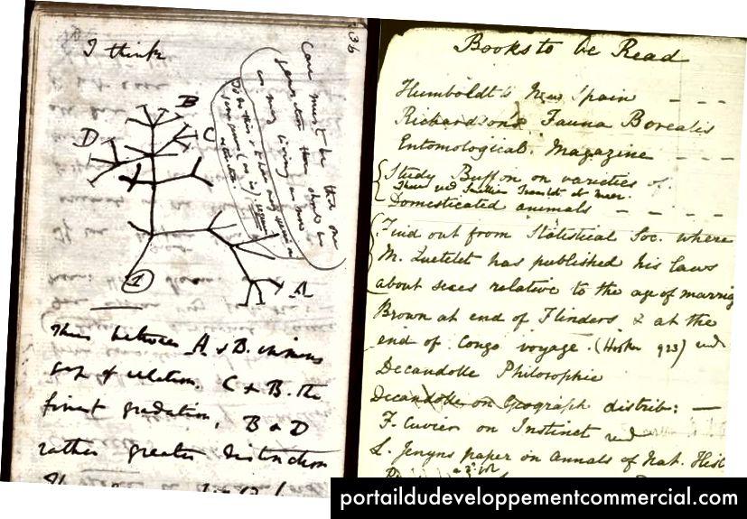 Charles Darwin a gardé de nombreux cahiers pour consigner ses découvertes et ses réflexions sur tout, de son premier croquis d'un arbre évolutif (à gauche) à d'importants livres à lire (à droite). (Photo: domaine public)