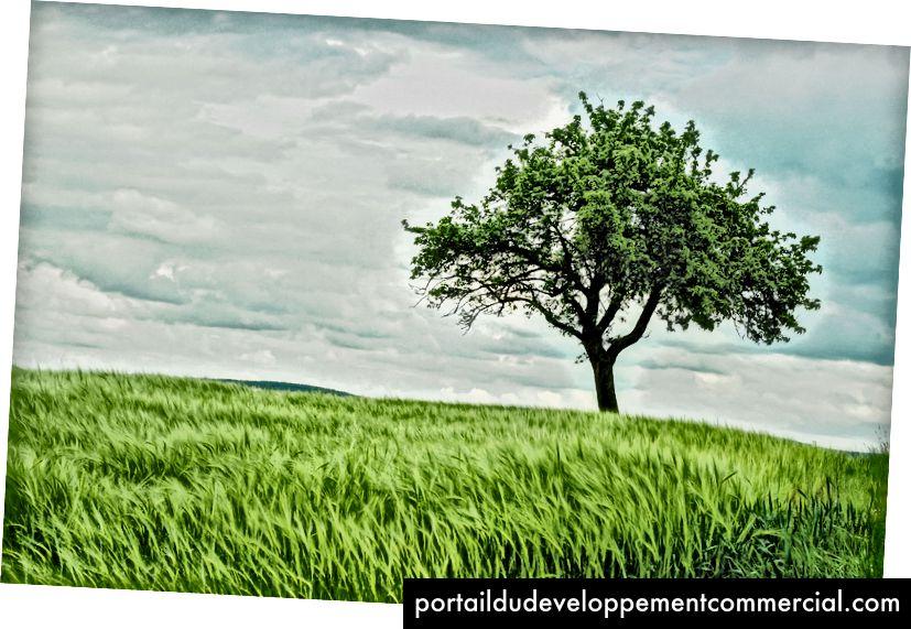"""""""Un arbre isolé dans un champ de blé vert frais"""" de Johann Siemens dans Unsplash"""
