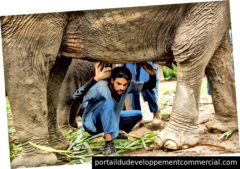 थाई संस्कृति में, हाथी के नीचे रेंगना सौभाग्य माना जाता है। एक टूर गाइड के रूप में, मैं अपने नेतृत्व का पालन करने के लिए इच्छुक पर्यटकों को आमंत्रित करूंगा। मुझे अक्सर यह पछतावा होता है क्योंकि मुझे यकीन है कि इसने हाथियों को असहज कर दिया था। फोटो साभार: SMR