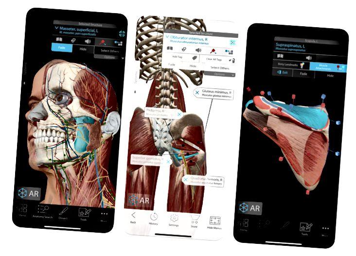 Anatomy 4D App Store skærmbillede