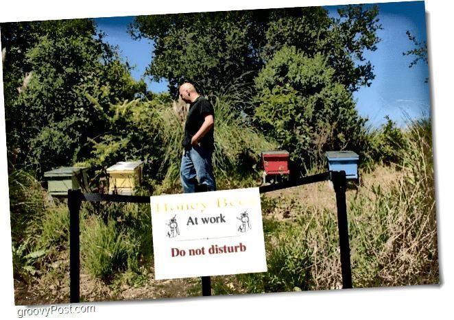 Google Honey Bees 4 Hives am Fréijoer