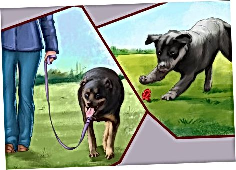 Rottweilerni qabul qilishga tayyorgarlik