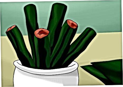 Veggie Jim qilish