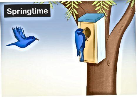Bluebirds uchun uy quradigan qutilar bilan ta'minlash