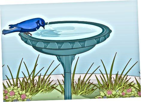 Bluebirds uchun xavfsiz va do'stona yashash joyini yaratish