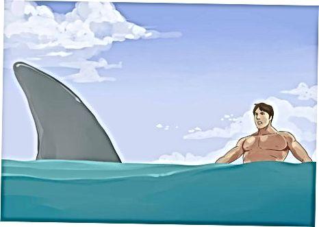Shark bilan uchrashish