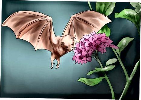 Bat harakatini tushunish