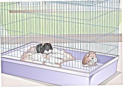 Hamster nasli bilan ishlov berish