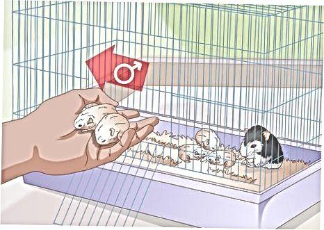Hamster mushuklariga g'amxo'rlik qilish