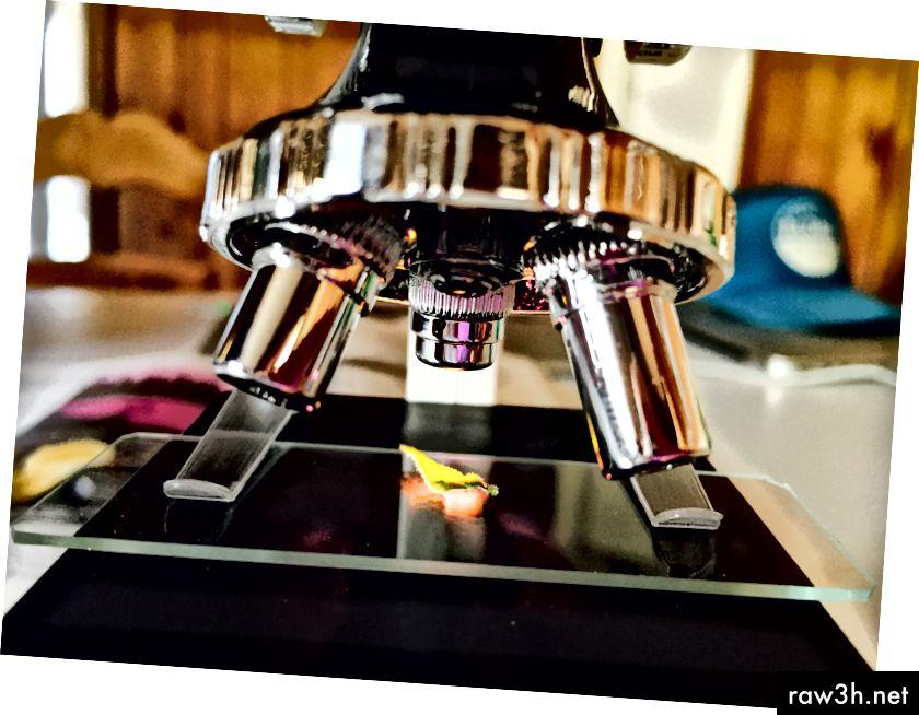 Проба от Танги, поставена върху слайда на микроскопа.