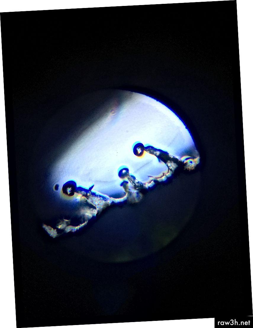 منظر مجهرى للشعيرات على ولاية أوريغون ليمون.
