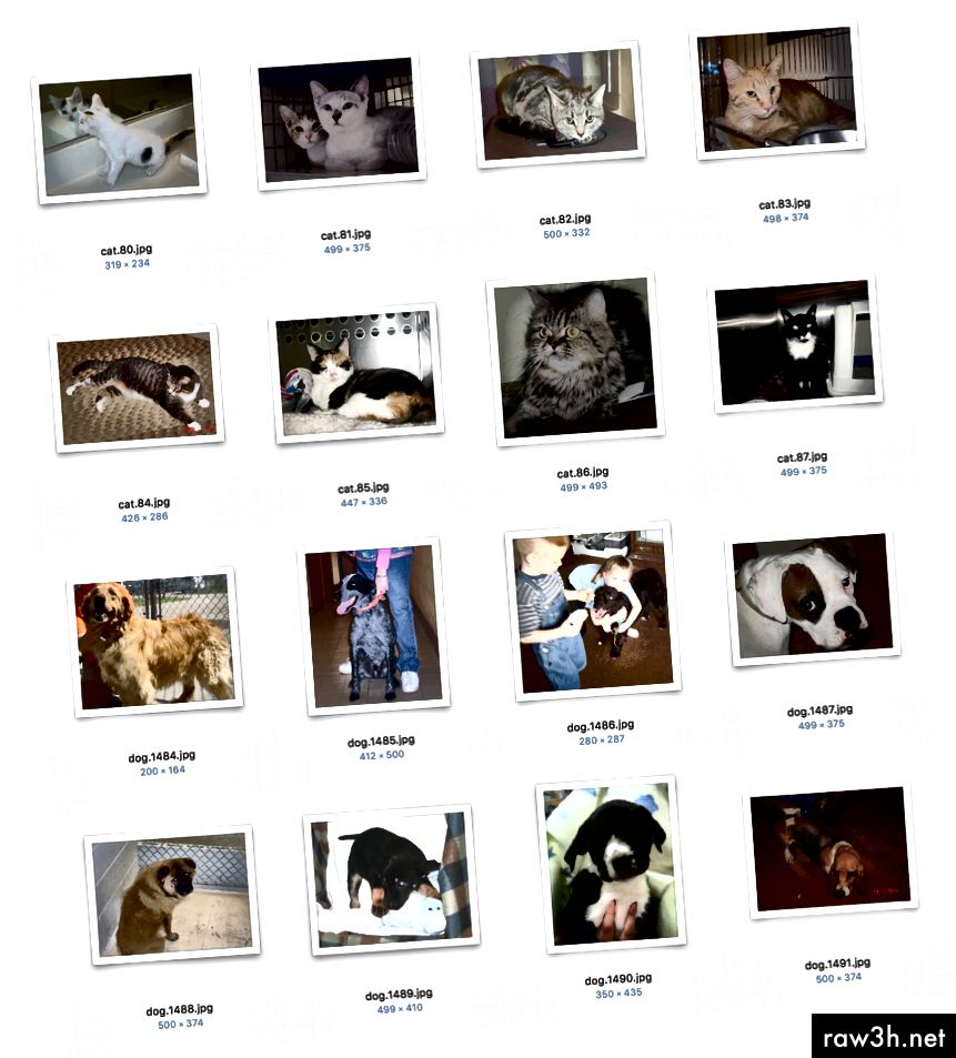 Ukázkové obrázky z datového souboru Kaggle's Cat vs Dog