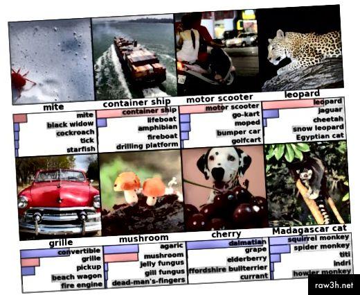 التعرف على الصور مع أفضل 5 تسميات متوقعة واحتمالاتها (الصف الأحمر يدل على الإجابة الصحيحة) http://papers.nips.cc/paper/4824-imagenet-classification-with-deep-convolutional-neural-networks.pdf