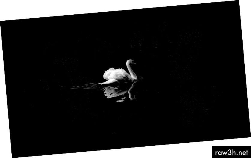 """Често цитиран пример за фалшифицираност: твърдението, че """"всички лебеди са бели"""" може да бъде доказано невярно чрез намиране на доказателства за съществуването на един черен лебед. (Снимка на David Cohen за Unsplash)"""