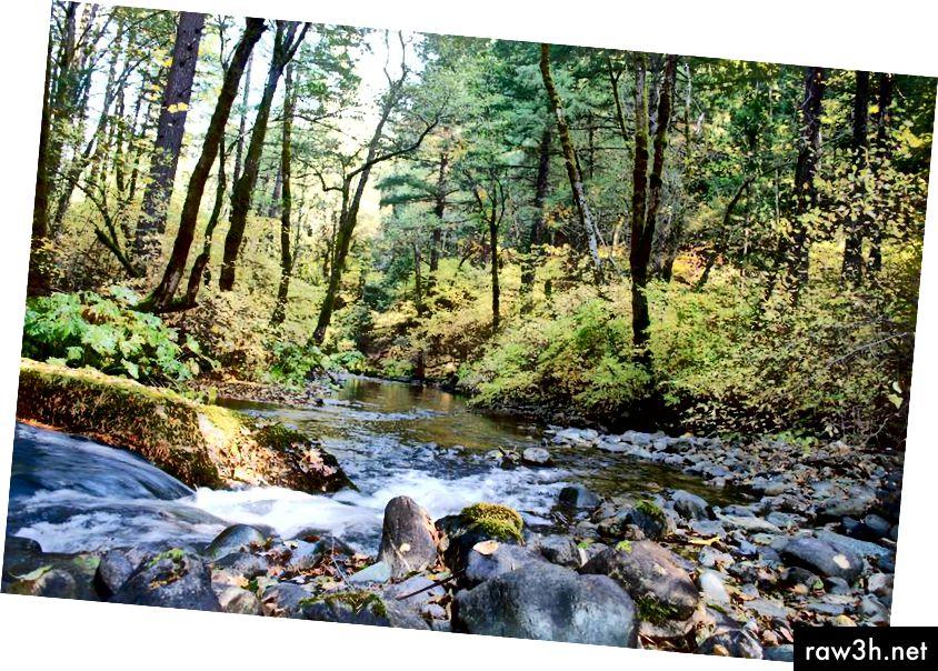 يمكنك حفظ فدان كامل من الغابة الصحية إذا تخلصت من فوطك الورقية اليوم.