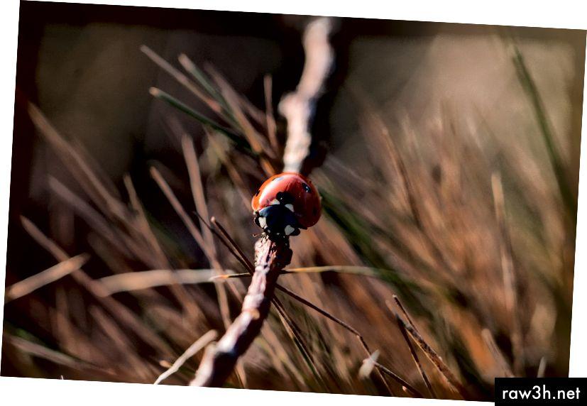 Изображение на дамска птица от pixabay