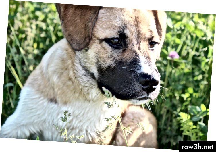 أفضل صديق لي MAX - توفي من برافو.