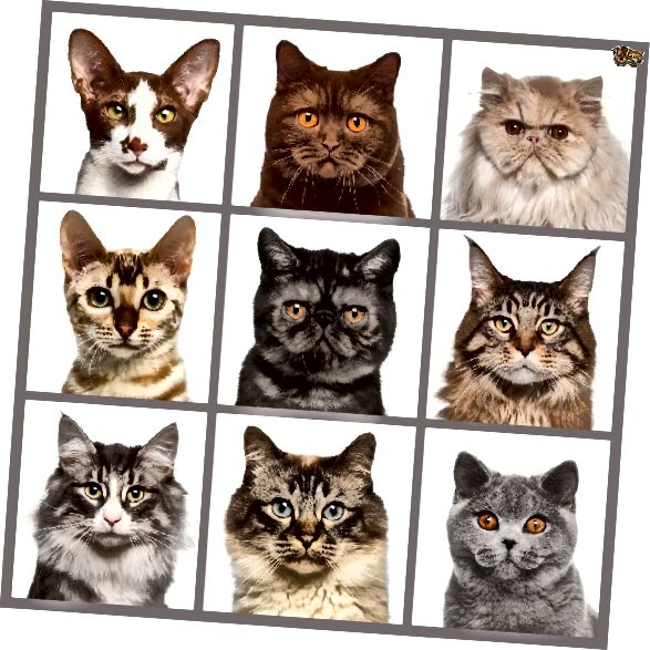 ब्रैडी बंच, बिल्ली संस्करण