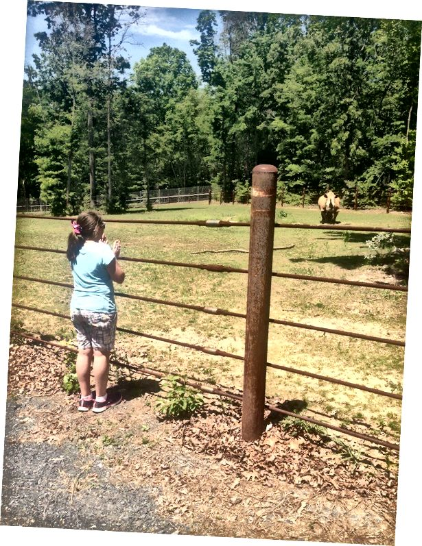 V zoo v Severní Karolíně jsme byli povoleni v zákulisí a mohli jsme se dotýkat nosorožců, ale pouze pokud k nám přišli. Ten se rozhodl zůstat pryč.