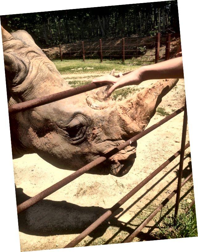 Tento nosorožec nás více zajímal. V etických zoologických zahradách nejsou zvířata nucena dotýkat se zvířat nebo jsou omezené doby, kdy se jich můžete dotknout.