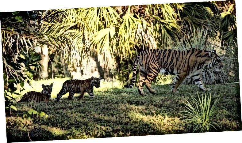Etické zoologické zahrady vytvářejí pro zvířata realističtější výběhy a umožňují mladým zůstat s matkou. Fotografie z časopisu Atrakce.