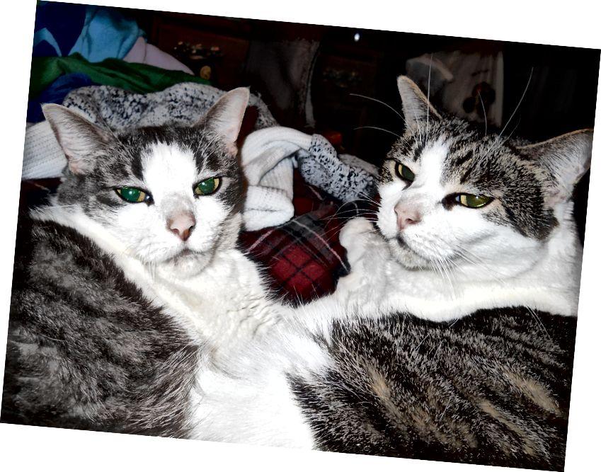 बुच और टेनी की तस्वीर लेखक के सौजन्य से।