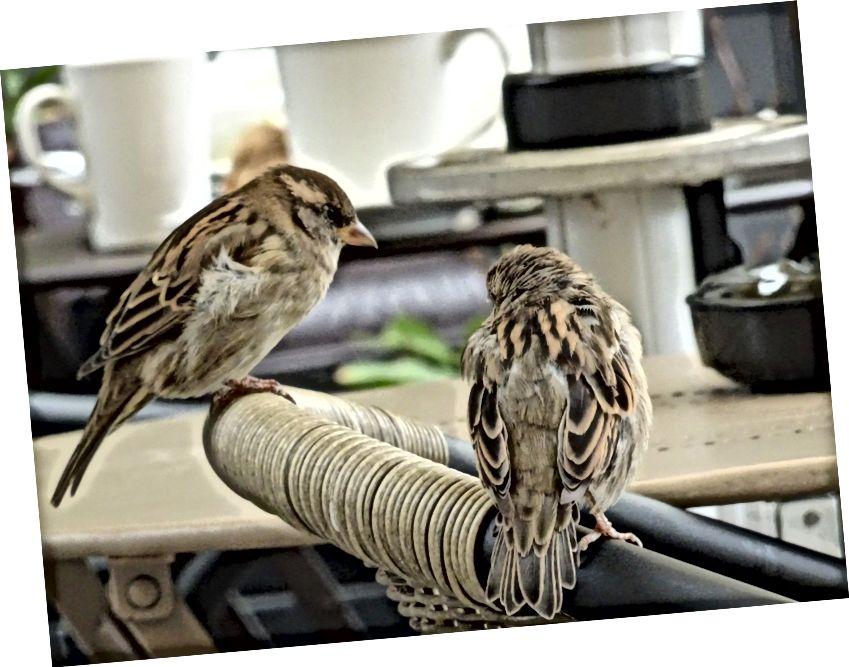 एक छोटे से पक्षी ने मुझे बताया ... कुछ शराबी दोस्तों के साथ एक कॉफी साझा करना