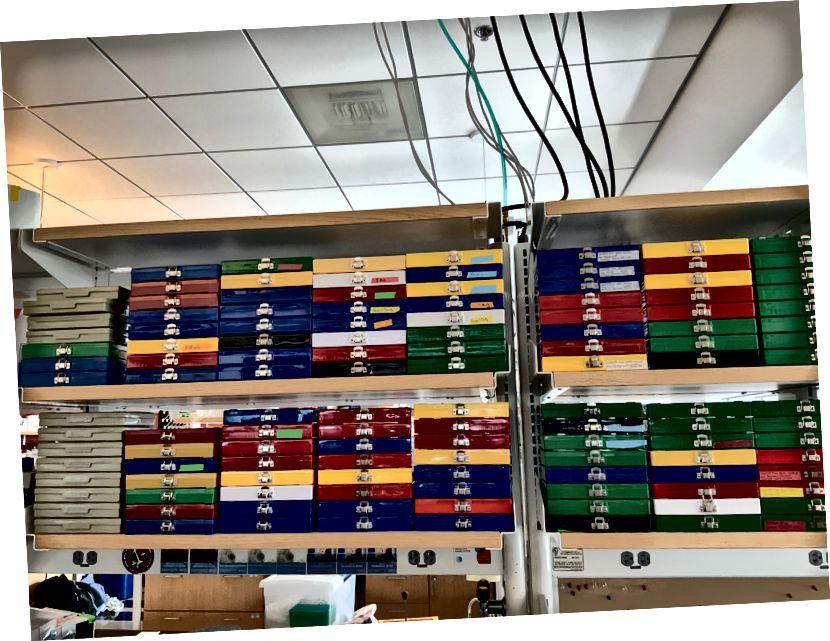 শিকাগো বিশ্ববিদ্যালয়ের একটি শূন্য ল্যাবটিতে 250 মাইক্রোস্কোপ স্লাইড স্টোরেজ পাত্রে বাকী রয়েছে।