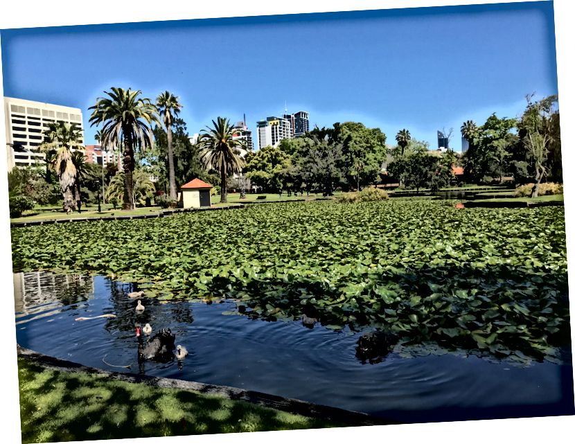 Η ευτυχής θέση του συγγραφέα: Queens Gardens, Περθ, Δυτική Αυστραλία