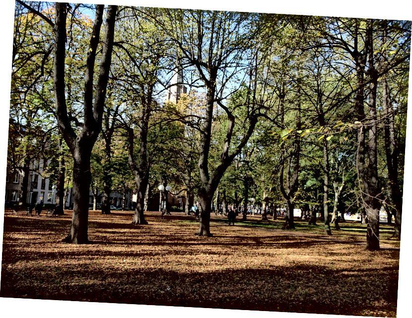 الخريف في بون هو عندما سترى المدينة بألوانها المجيدة