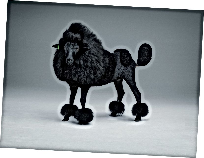 Studio Lernert & Sander X de Volkskrant 'Black Sheep'