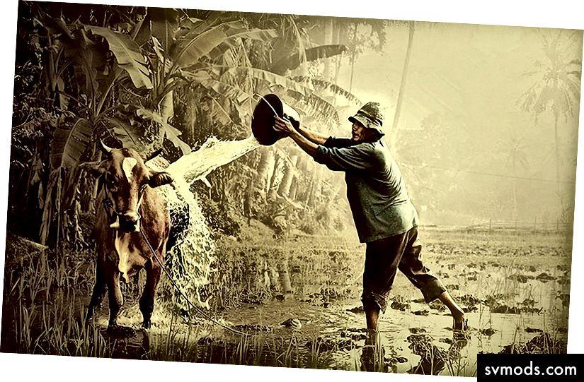 http://deskbg.com/i/c/1440x900/wpp/18/18698/cow-and-farmer-desktop-background.jpg