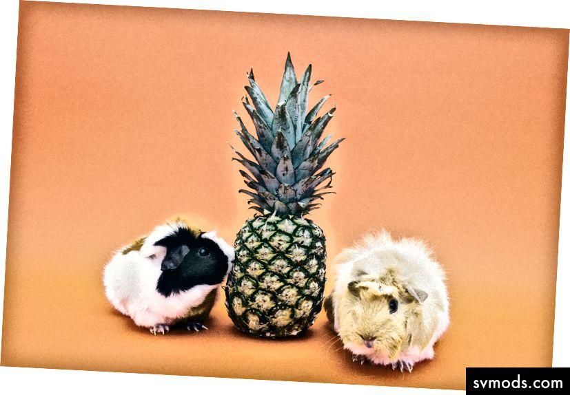 Minimierte Ananas mit freundlicher Genehmigung von Pexels.