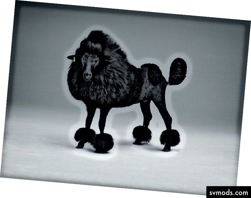Studio Lernert & Sander X de Volkskrant 'Black Sheep'