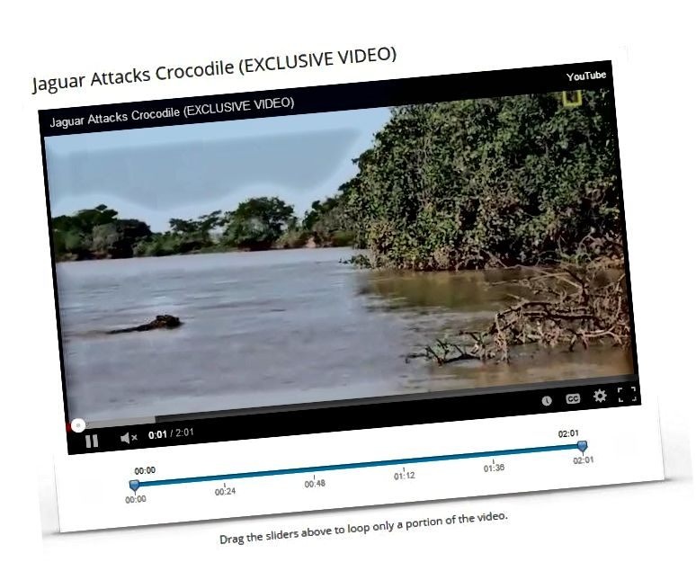 loop video situs web