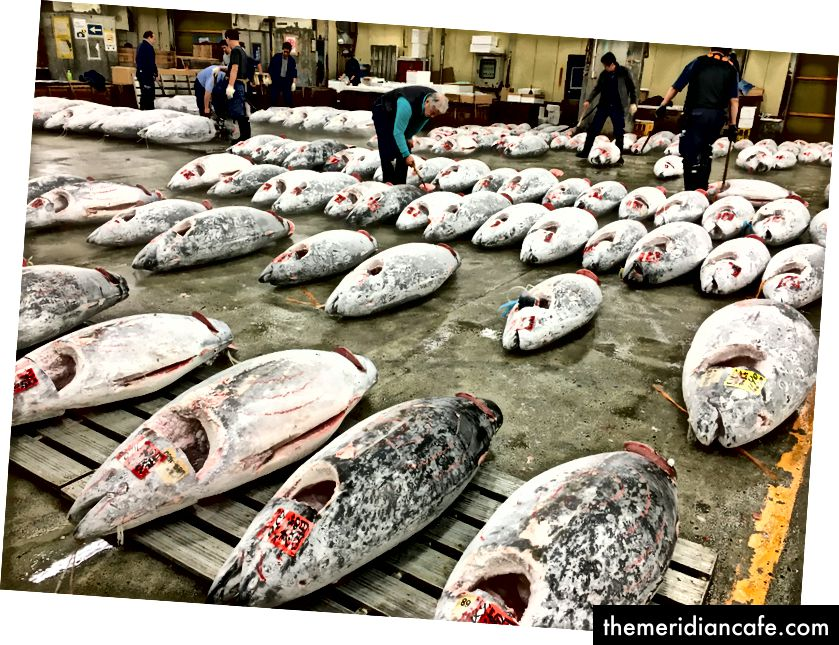 Atum congelado no mercado de Tsukiji - https://bestlivingjapan.com/tsukiji-tuna-auction-guide-2017/