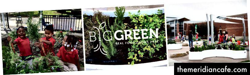 Big Green :: Tutaj rośnie prawdziwe jedzenie