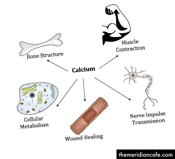 Funkcje wapnia w ludzkim ciele