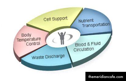 Funkcje wody w ciele człowieka