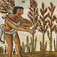 Anbau von Huaútli